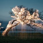 Tree of a Lucid Dream